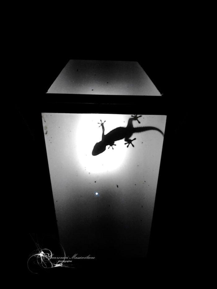 Fotografia di Canzonieri Massimiliano - Piccolo geco immortalato dentro un vecchio lampione esterno in sicilia